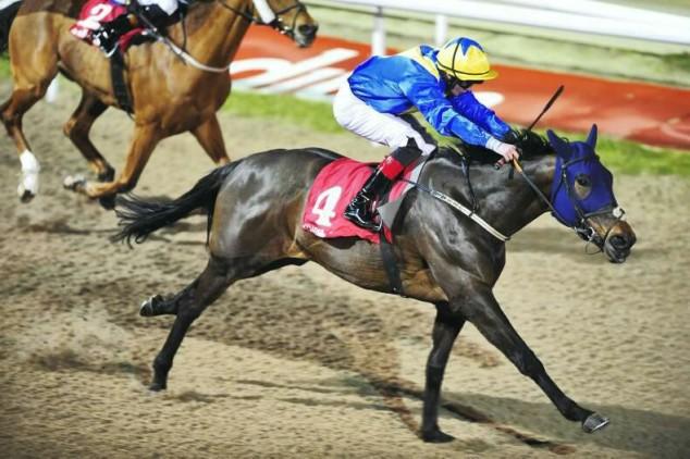 Image result for pointin horse dundalk