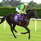 ROYAL RACING CLUB: €375 TO BECOME AN OWNER OF FIVE HORSES